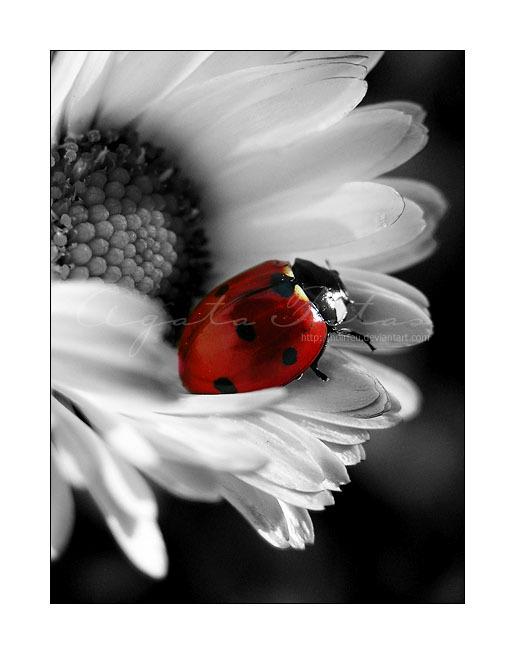 Sanny...la figlia dei fiori! - Pagina 3 Ladybu10