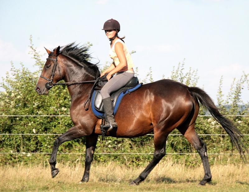 Une photo de vous et votre cheval Vac_al10