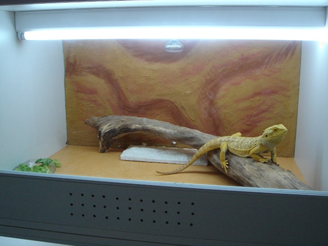 Ma nouvelle salle d'élevage en travaux Final_13