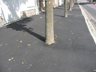 Folie Palmiers à Saint-Nazaire Arbre_10