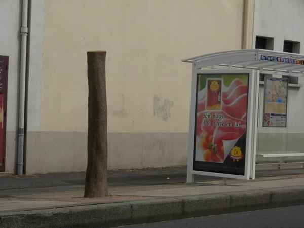 Folie Palmiers à Saint-Nazaire Arbre_13