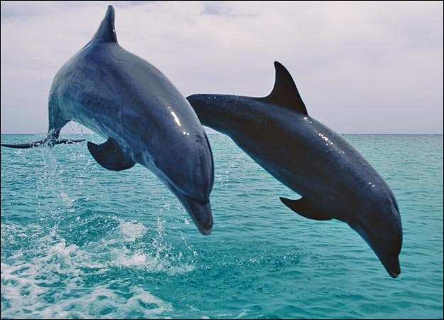 ~A new world~ A Dolphins Rp ~ Dolphi10