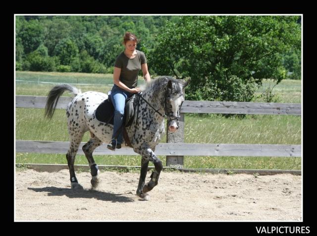Mes photos de chevaux... - Page 4 11110