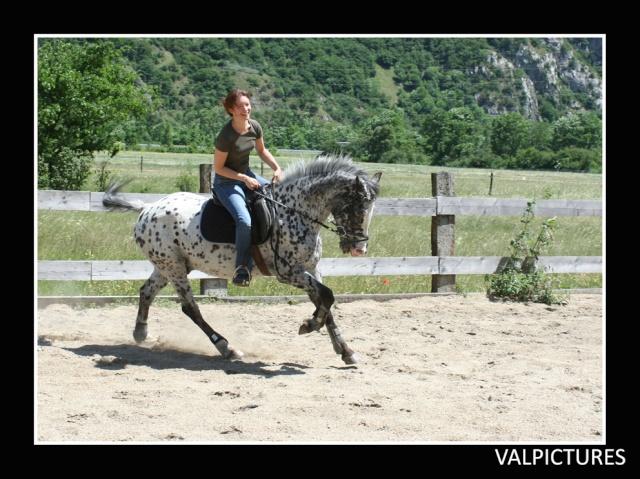 Mes photos de chevaux... - Page 4 131110