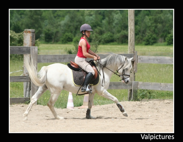 Mes photos de chevaux... - Page 3 210