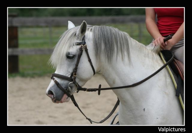 Mes photos de chevaux... - Page 3 310