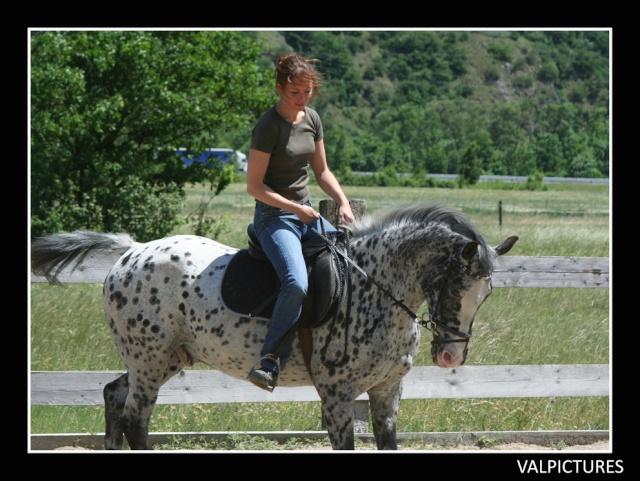 Mes photos de chevaux... - Page 4 91210