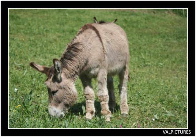 Vos plus belles grimaces de cheval et photos gag .... - Page 5 A11210