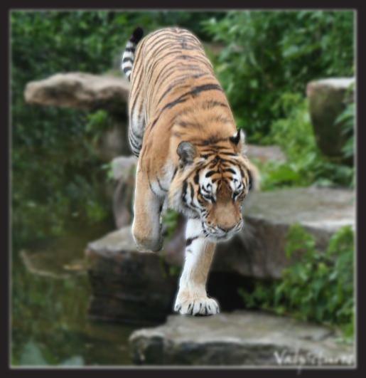 Plusieurs manip simples que vous savez réaliser Tigre210