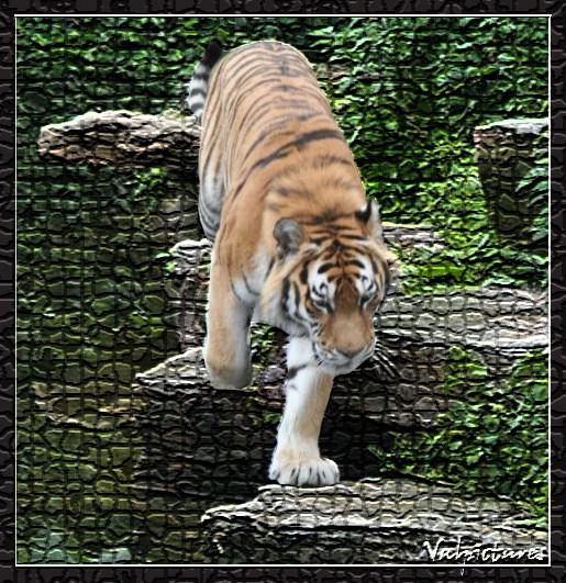 Plusieurs manip simples que vous savez réaliser Tigre410