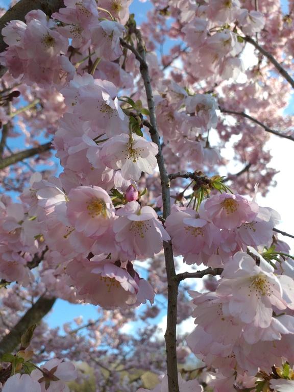 Floraisons du mois d'Avril 20210311