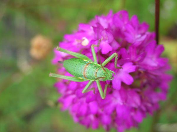 photographier les insectes, aussi. Sauter10