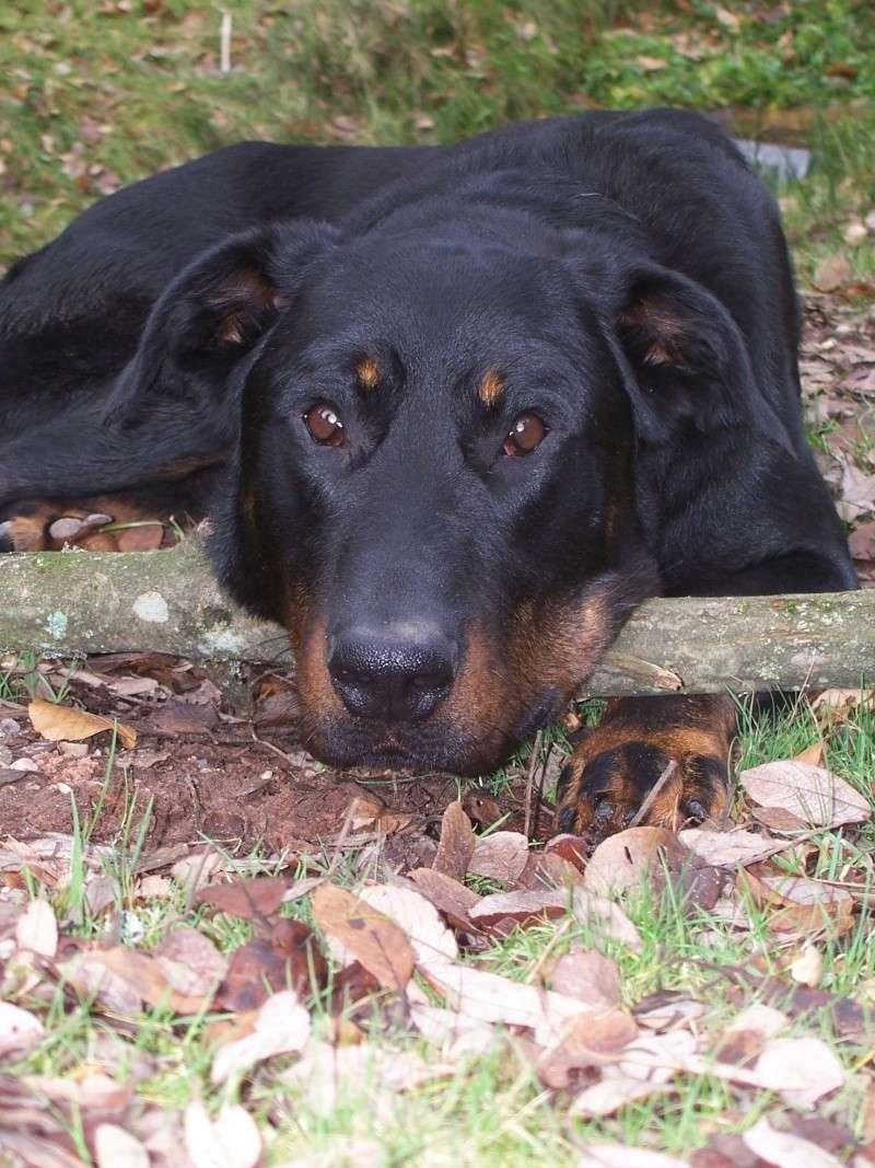 """Concours de la photo de chiens la plus """"belle"""" 04510"""