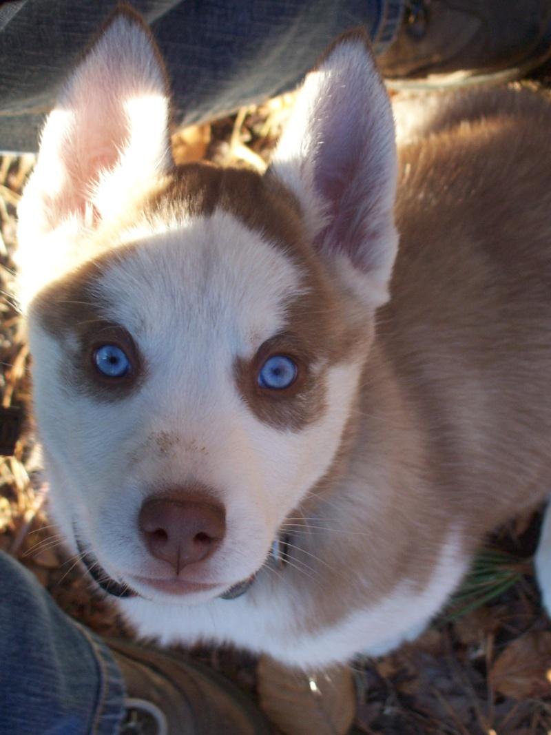 """Concours de la photo de chiens la plus """"belle"""" 05810"""
