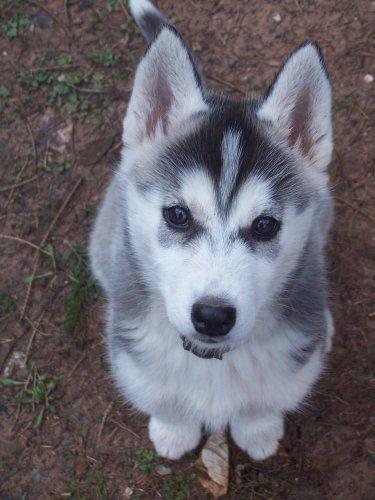 """Concours de la photo de chiens la plus """"belle"""" 21160710"""