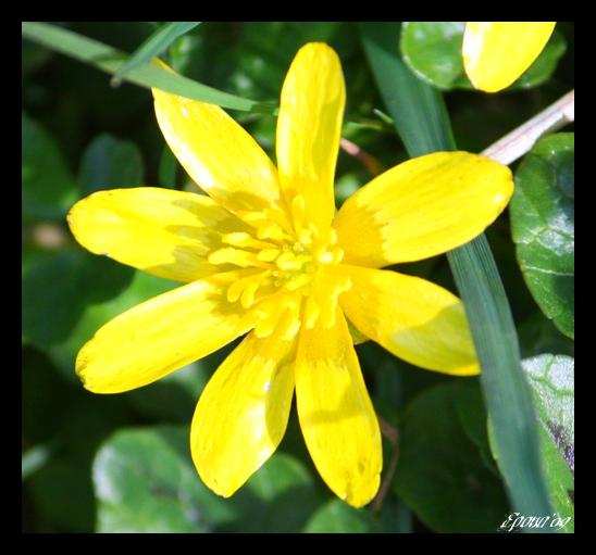le printemps Flower14