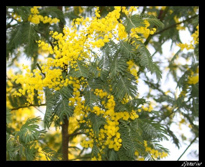 le printemps Flower16