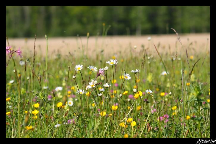 le printemps Flower17