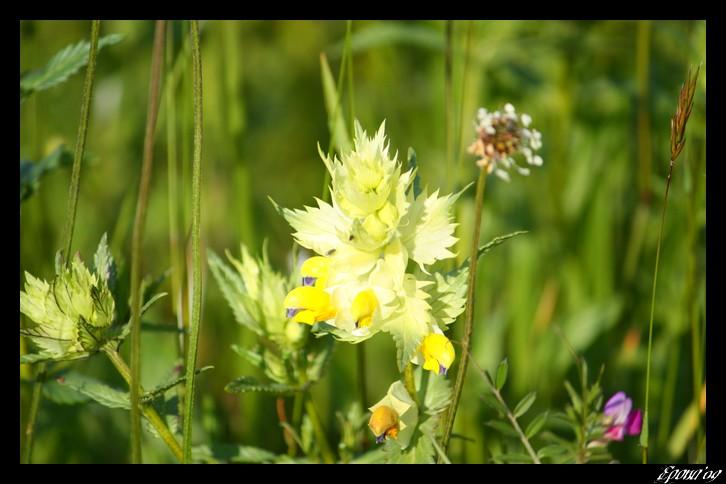 le printemps Flower18