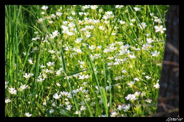 le printemps Flower19