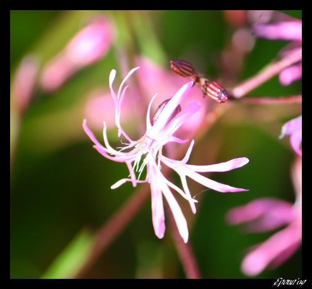 le printemps Flower20