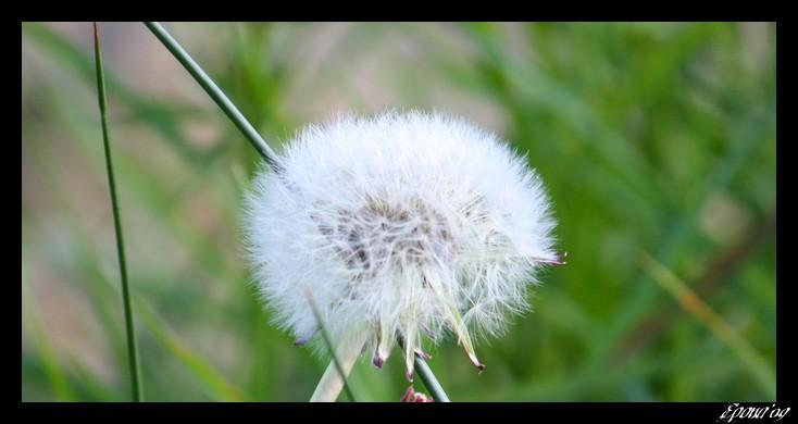 le printemps Flower22