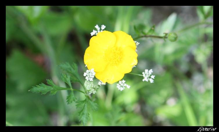 le printemps Flower23