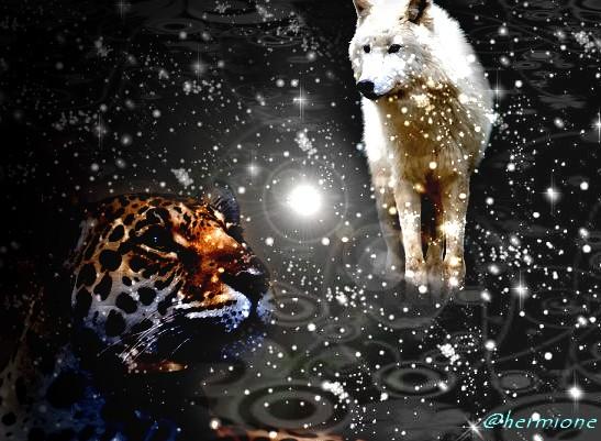 Félins et Canins