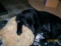 Ancien Concours n°3 C'est un SPECIAL CHIEN EN POSITION COUCHE gagné par Toscane la chienne de Marine 100_2310