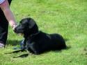 Ancien Concours n°3 C'est un SPECIAL CHIEN EN POSITION COUCHE gagné par Toscane la chienne de Marine 23715211