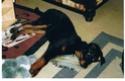 Ancien Concours n°3 C'est un SPECIAL CHIEN EN POSITION COUCHE gagné par Toscane la chienne de Marine Alias10