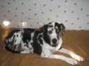 Ancien Concours n°3 C'est un SPECIAL CHIEN EN POSITION COUCHE gagné par Toscane la chienne de Marine Toscan10