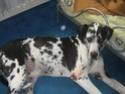 Ancien Concours n°3 C'est un SPECIAL CHIEN EN POSITION COUCHE gagné par Toscane la chienne de Marine Toscan12