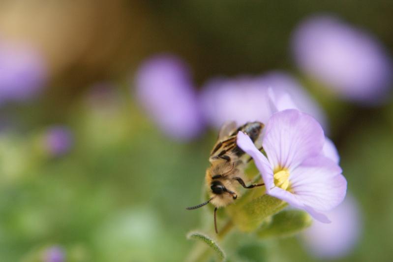 Herping dans mon jardin Dsc02710