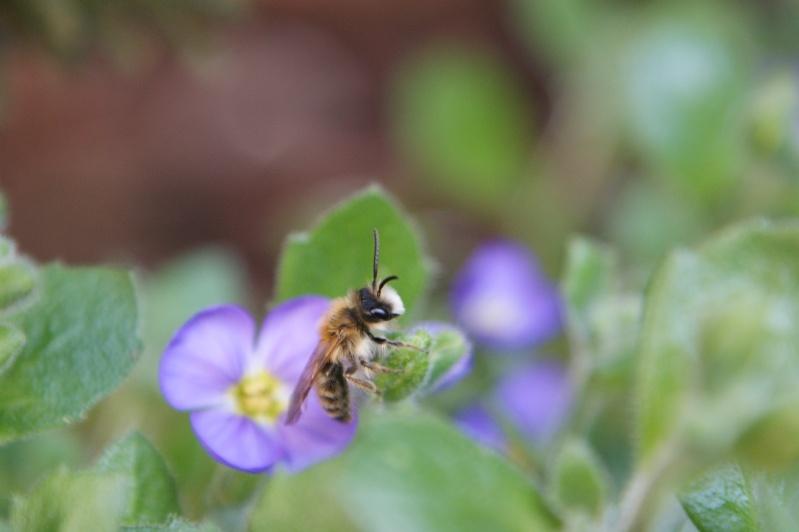 Herping dans mon jardin Dsc02711