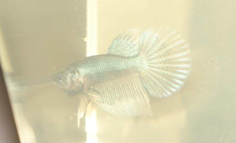 white platinium / Turquoise bf Dsc09010