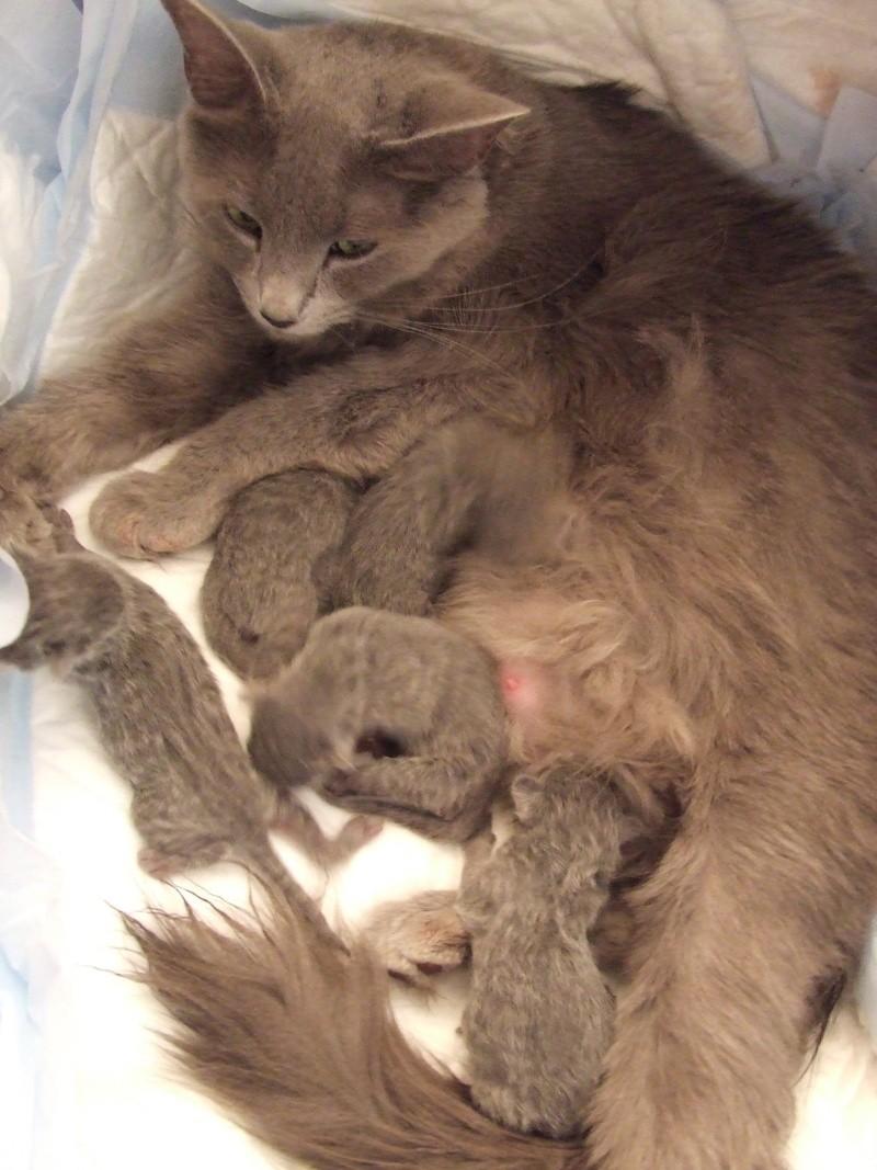Dwilwenn's babies 15-11-11