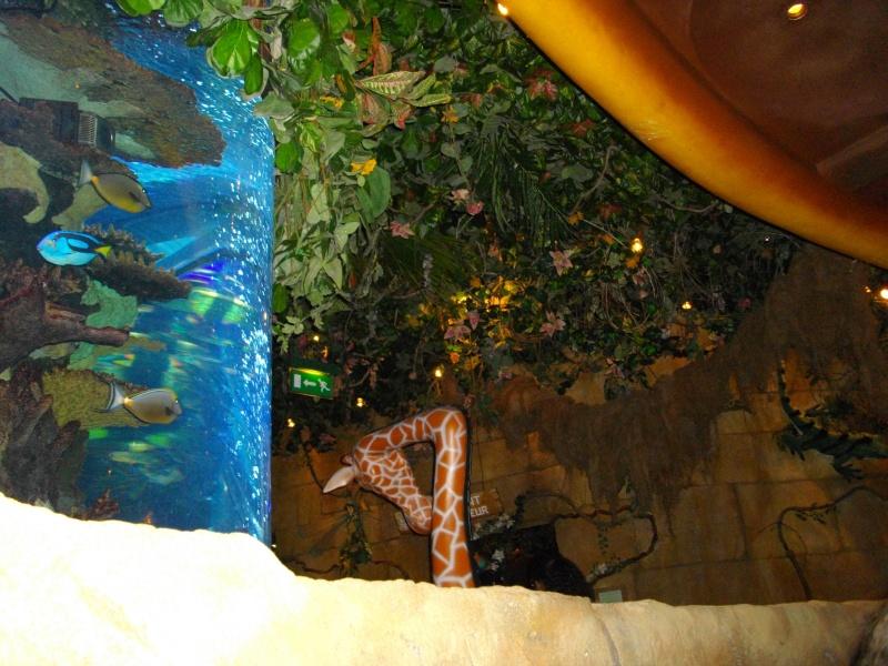 rainforest cafe Imgp3611