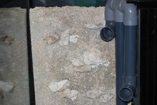Le bac des Maniacodesrécifs (méthode Reefcorner) - Page 4 Dsc_0118