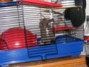 LE RAT ET SA QUEUE Accroc10
