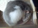 LE RAT ET SA QUEUE Dsc00111
