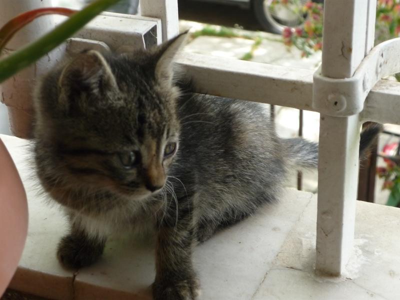 Η γάτα της πασχαλιάς! 00110
