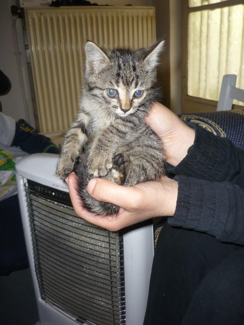 Η γάτα της πασχαλιάς! 00610