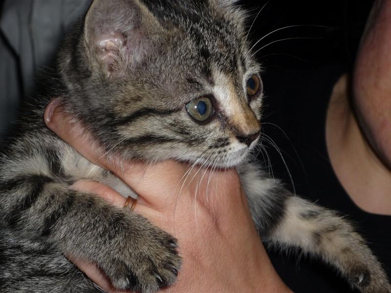 Η γάτα της πασχαλιάς! 01110