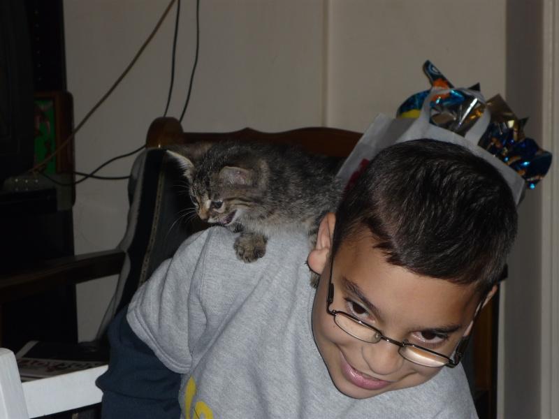 Η γάτα της πασχαλιάς! 02310