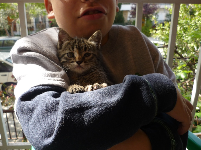 Η γάτα της πασχαλιάς! 04510