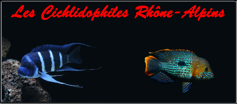 Les Cichlidophiles Rhône-Alpins