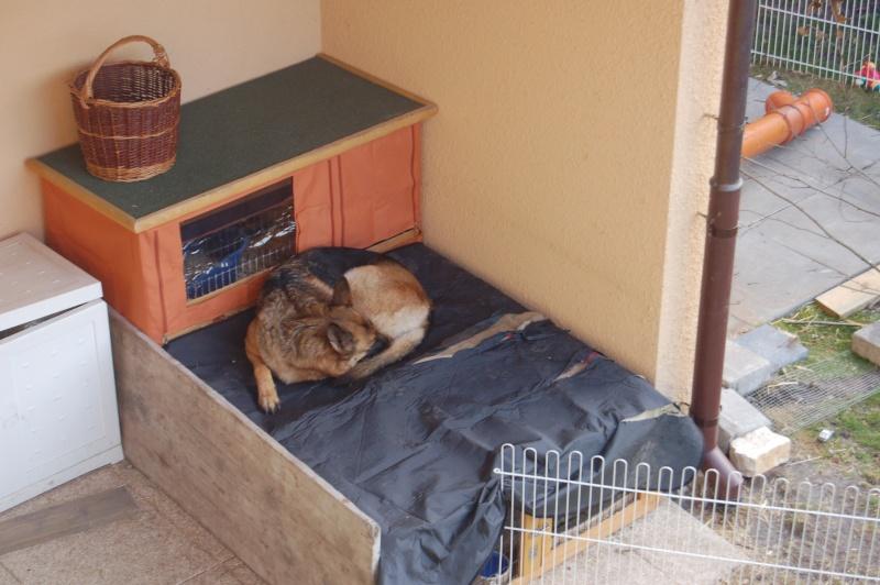 enclos lapin fait maison ventana blog. Black Bedroom Furniture Sets. Home Design Ideas