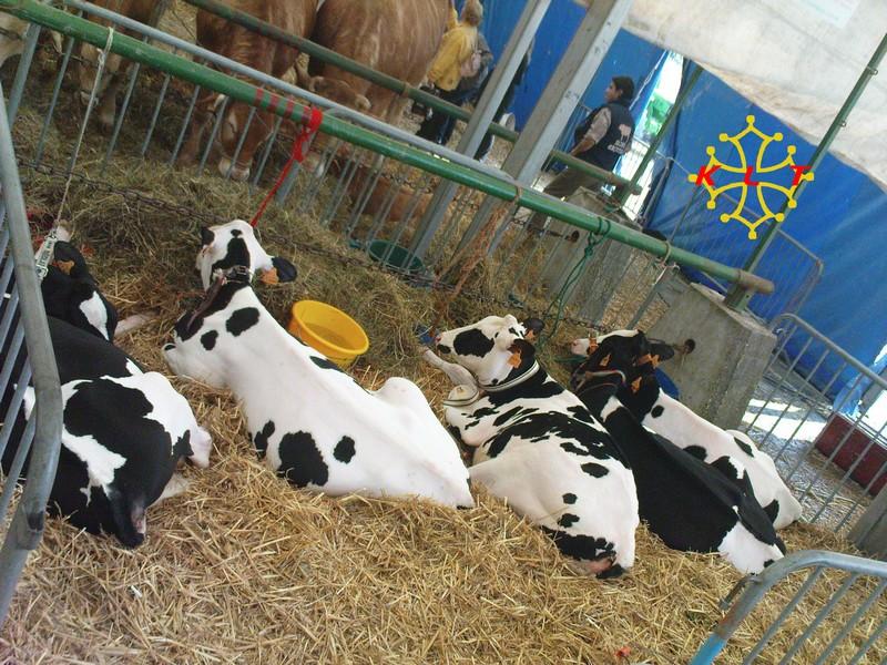 50eme Foire agricole de Réalmont (81) 4 & 5 Avril 2009 1310
