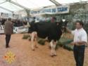 50eme Foire agricole de Réalmont (81) 4 & 5 Avril 2009 1110